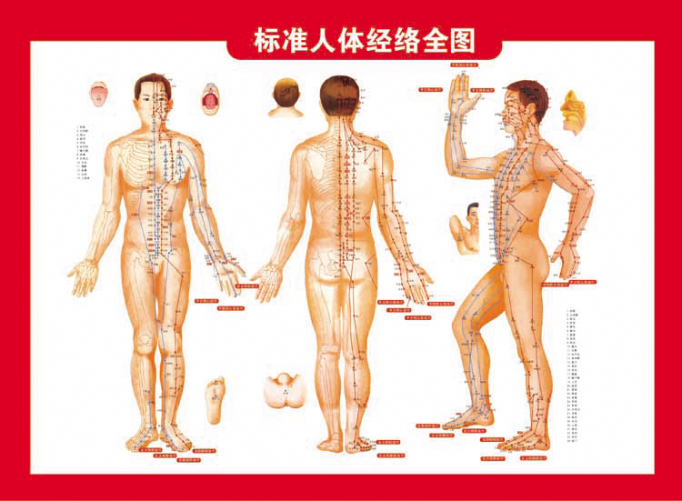 人体穴位囹il_艾灸 人体穴位图